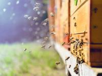 Naukowcy stworzyli pierwszą globalną mapę pszczół