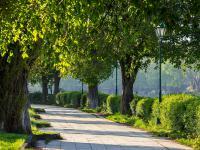 Standardy postępowania z drzewami w mieście - weź udział w webinarium