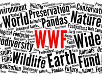 Czy organizacja WWF łamała prawa człowieka?
