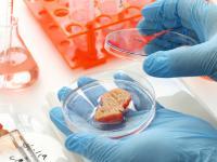 Mięso wyhodowane w laboratorium trafi do sprzedaży!