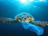 Które tworzywa sztuczne sieją największe spustoszenie w oceanach?