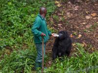 Uzbrojeni mężczyźni zabili sześciu strażników w parku narodowym Virunga