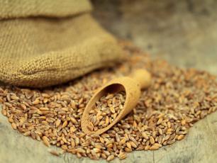 Mąka z płaskurki ‒ właściwości, skład i zastosowanie mąki z płaskurki