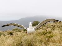 Gapowaty albatros podbił internet