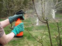 Naturalne metody zapobiegania występowaniu chorób grzybowych w ogrodzie