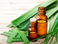 Olejek z trawy cytrynowej – właściwości i działanie. Jak stosować olejek z trawy cytrynowej?