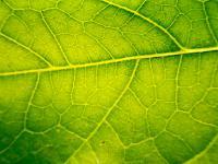 Roślinne komórki macierzyste ‒ właściwości, działanie i zastosowanie roślinnych komórek macierzystych