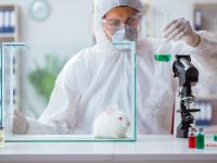 Do sieci trafiły kulisy barbarzyńskich eksperymentów na zwierzętach