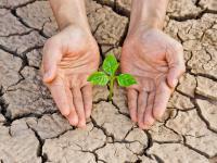 Które rośliny najbardziej cierpią w czasie suszy? Jak im pomóc?