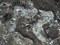 Bakterie pomogą usunąć mikroplastiki ze środowiska