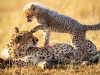 Niezwykłe matki w świecie zwierząt