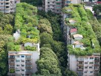 Zielone dachy to nie fanaberia!