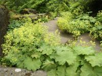 Kwiaty dla miłośników rustykalnych ogrodów? Postaw na przywrotniki!