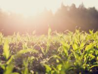 Mikroby i energia słoneczna sprawią, że jedzenie na talerzach będzie zrównoważone