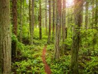 Kolejny powód by sadzić drzewa! Więcej lasów, to więcej deszczu ‒ przekonują badacze