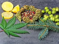 Terpeny i terpenoidy – czyli najzdrowsze z naturalnych zapachów