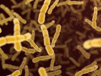 Czym są paciorkowce i jakie choroby wywołują