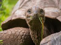 Przerażające i niesamowite sceny! Żółw olbrzymi atakuje i zjada pisklę rybitwy