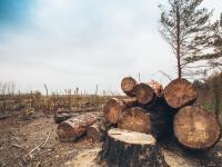 Nawet jedna trzecia gatunków dzikich drzew może zniknąć z powierzchni ziemi