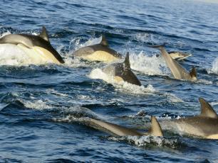 To była prawdziwa rzeź! W ciągu jednego dnia zabili około 1400 delfinów