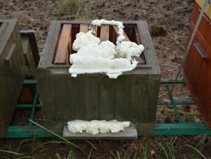 Zabili 420 tys. pszczół, a część uli zatkali pianką montażową