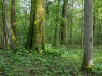 Mieszkańcy Małopolski chcą wykupić las by chronić go przed wycinką!
