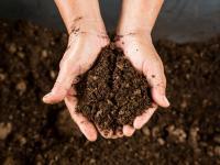 Torf – do czego przydaje się w ogrodzie?