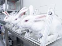 Zwierzęta laboratoryjne będą cierpiały za zamkniętymi drzwiami