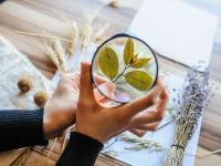 Czym zajmuje się botanik? Na czym polega praca botanika?