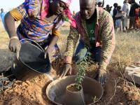 Uchodźcy w Kamerunie zamieniają pustynny obóz w bujny las