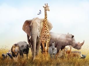 10 zwierząt Afryki, które trzeba zobaczyć