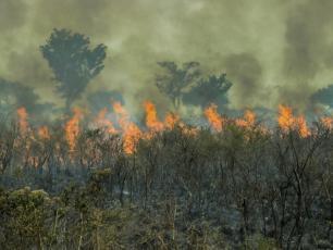 Pożary, wylesianie i zmiany klimatu zamieniają lasy Unesco w źródła węgla