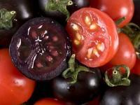 Fioletowe pomidory na raka?