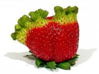 Czy GMO to zło?