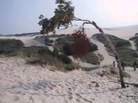 Drugi park ma morze