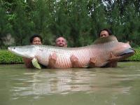 Ryby - Słodkowodne olbrzymy