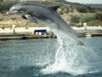 Tajemnica delfiniej szybkości
