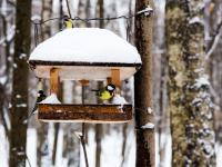 Jak karmić ptaki zimą, by im nie zaszkodzić