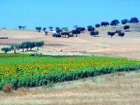 Globalna susza.  Rolnictwo w obliczu suszy