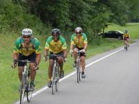 Rowerzyści, piły i drzewa