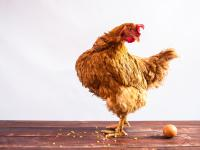 Co było pierwsze: jajko, czy kura?