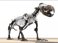Prehistoryczna foka przypominała wydrę