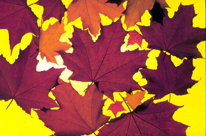 Liście drzew 47