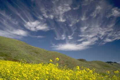 Wybrzeże Kalifornii 11