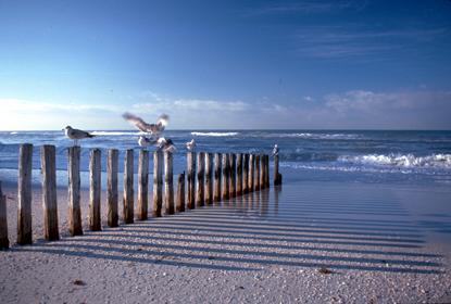 Wybrzeża 33