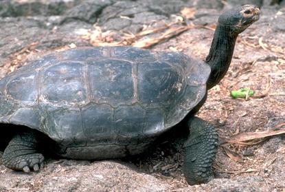 Dzikie Galapagos 3