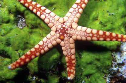 Podwodne Rafy 4