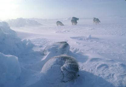 Arktyka 21