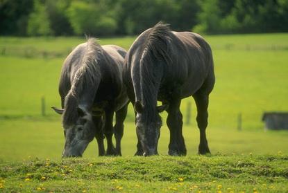 Konie 4