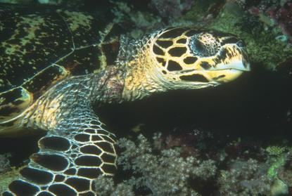 Podwodne życie w tropikach 1